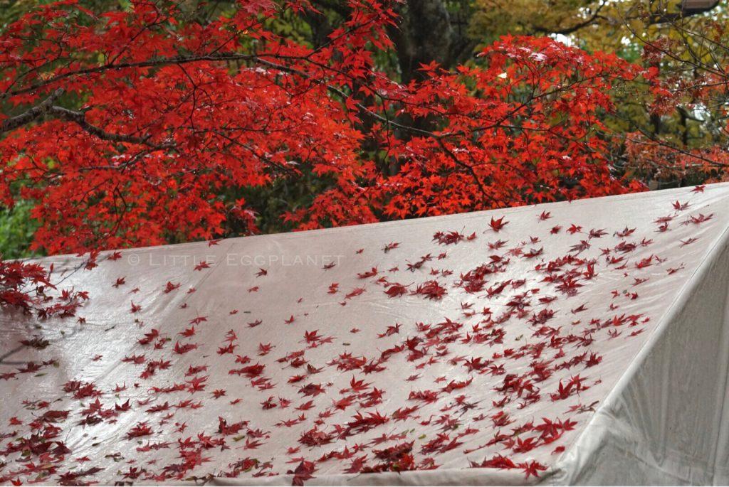 【青森縣】浪漫橘粉楓葉絕景-日本東北黑石中野紅葉山-遊記交通路線